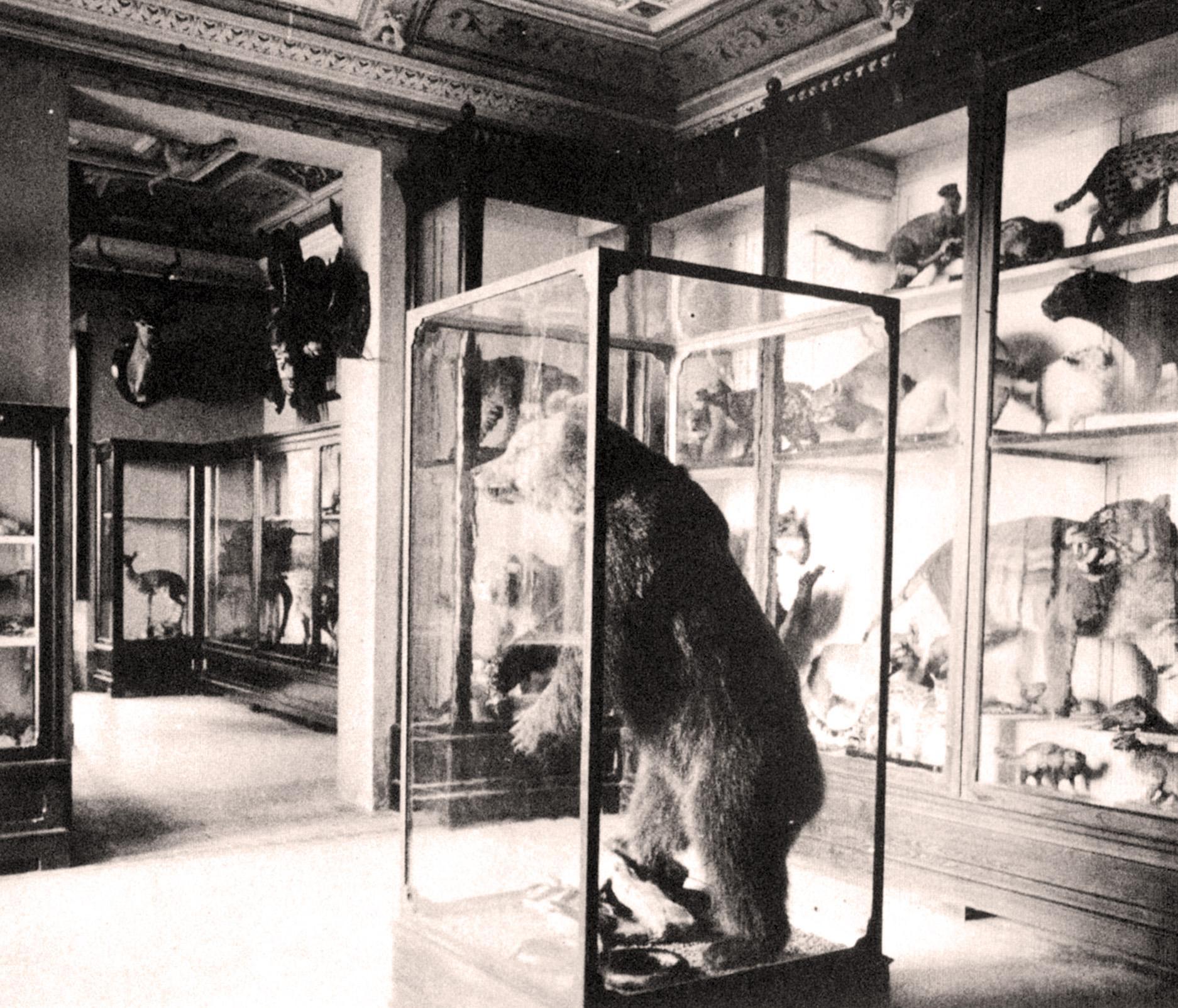 Uno scatto del secolo scorso con uno dei saloni dello Chalet-Museo di Villa Faraggiana di Meina