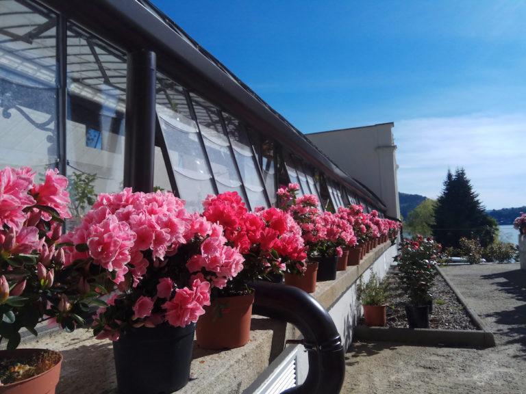 Serre di Villa Faraggiana al Museo Meina