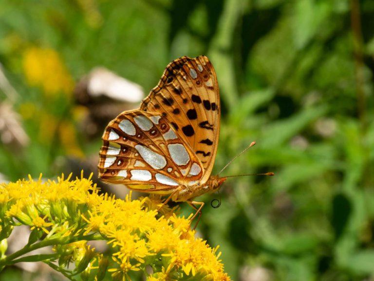 Farfalla mostra MicroMacro al Museo Meina